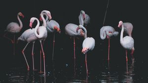 Preview wallpaper flamingo, birds, pond, reflection