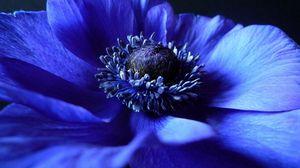 Preview wallpaper flower, background, blue, black, petals