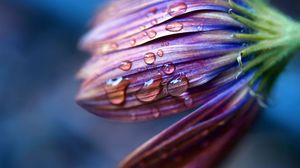 Preview wallpaper flower, drops, dew, spray