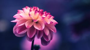 Flowers Wallpapers Hd Tablet Laptop 1366x768 Sort By Ratings