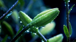 Preview wallpaper flower, plant, macro, drops