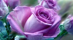 Preview wallpaper flower, rose, nature