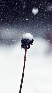 Preview wallpaper flower, stem, snow