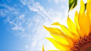 Preview wallpaper flower, sunflower, sky