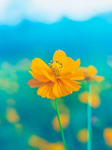 Preview wallpaper flower, yellow, delicate, blooms, petals, pistil, stem