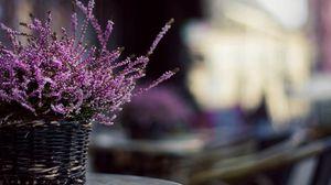 Preview wallpaper flowers, basket, plant
