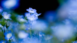 Preview wallpaper flowers, bloom, blue