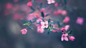 Preview wallpaper flowers, bloom, blur