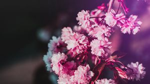 Preview wallpaper flowers, bloom, branch, pink, blur