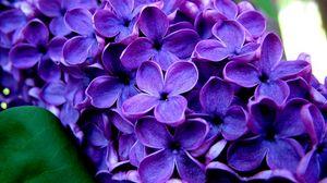 Preview wallpaper flowers, blue, grass, lilac