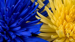 Preview wallpaper flowers, blue, yellow, petals