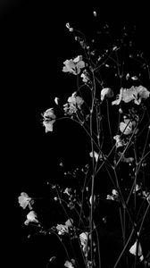Preview wallpaper flowers, branches, black and white, black