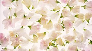 Preview wallpaper flowers, buds, petals, bright