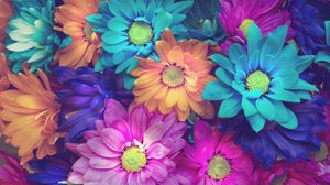 Preview wallpaper flowers, colorful, petals