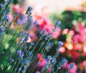 Preview wallpaper flowers, field, stems, blur
