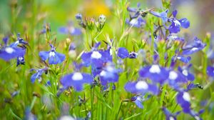 Preview wallpaper flowers, meadow, blue, green, summer