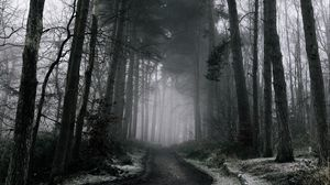 Preview wallpaper fog, forest, trees, winter, snow, branches, dark