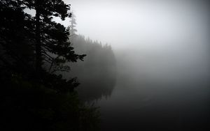 Preview wallpaper fog, forest, trees, shore