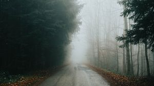 Preview wallpaper fog, road, trees, branches, autumn