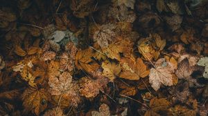 Preview wallpaper foliage, leaves, fallen, dry, autumn