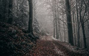 Preview wallpaper forest, autumn, fog, foliage, path, trees