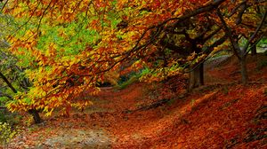Preview wallpaper forest, autumn, foliage, trees