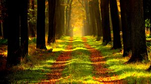 Preview wallpaper forest, autumn, path, fog