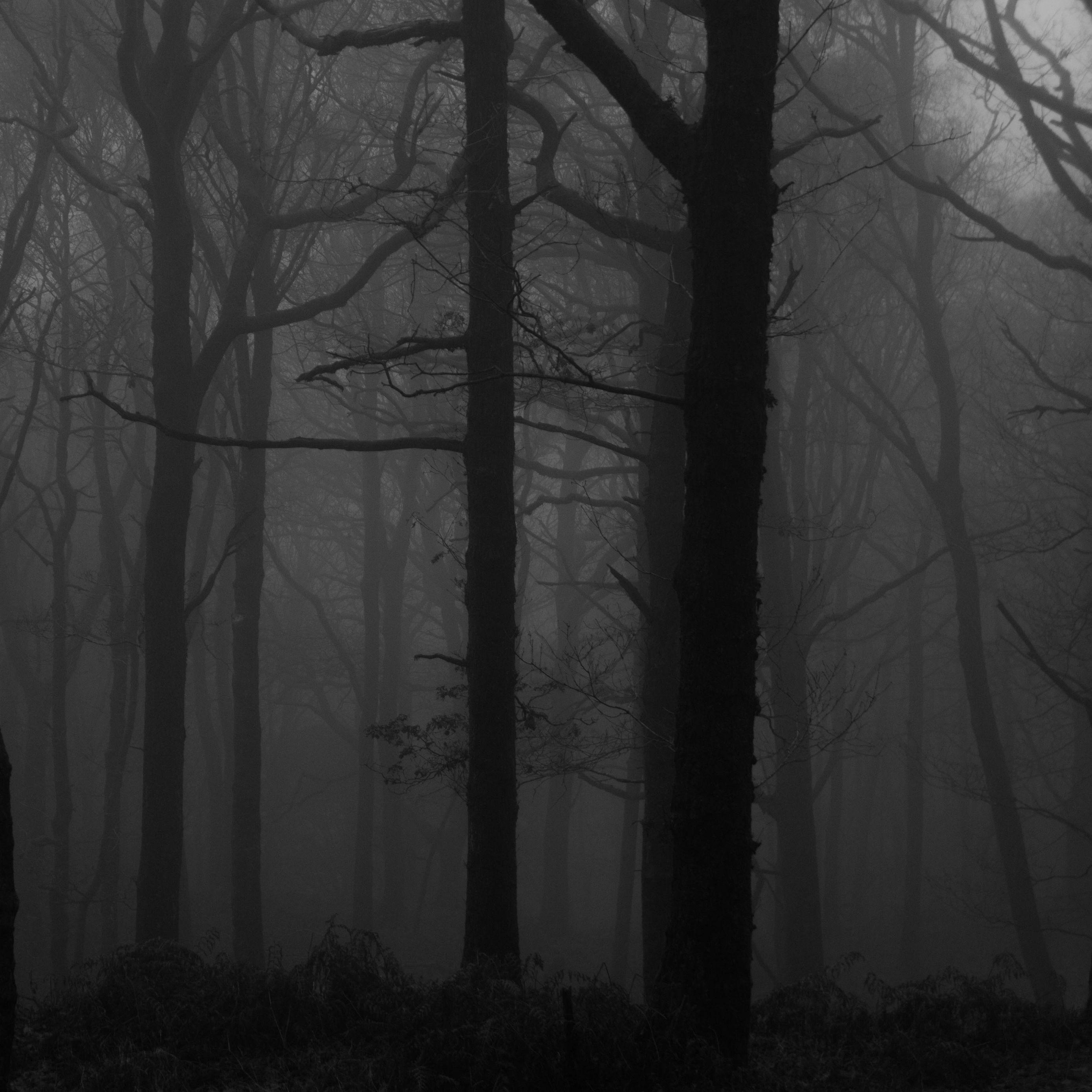 2780x2780 Wallpaper forest, fog, bw, trees, dark