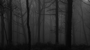 Preview wallpaper forest, fog, bw, trees, dark