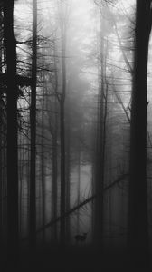 Preview wallpaper forest, fog, deer, bw, gloomy