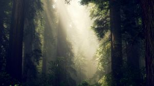 Preview wallpaper forest, fog, sunlight, trees