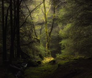 Preview wallpaper forest, fog, trees, branches, moss