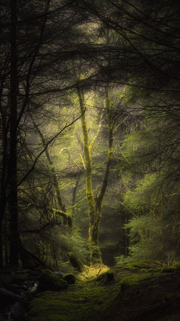 360x640 Wallpaper forest, fog, trees, branches, moss