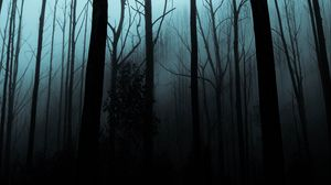 Preview wallpaper forest, fog, trees, gloomy, night