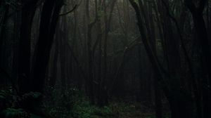Preview wallpaper forest, fog, trees, branches, autumn, dark, gloomy