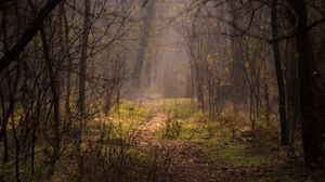 Preview wallpaper forest, fog, trees, branches, path