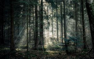 Preview wallpaper forest, fog, trees, branches, light