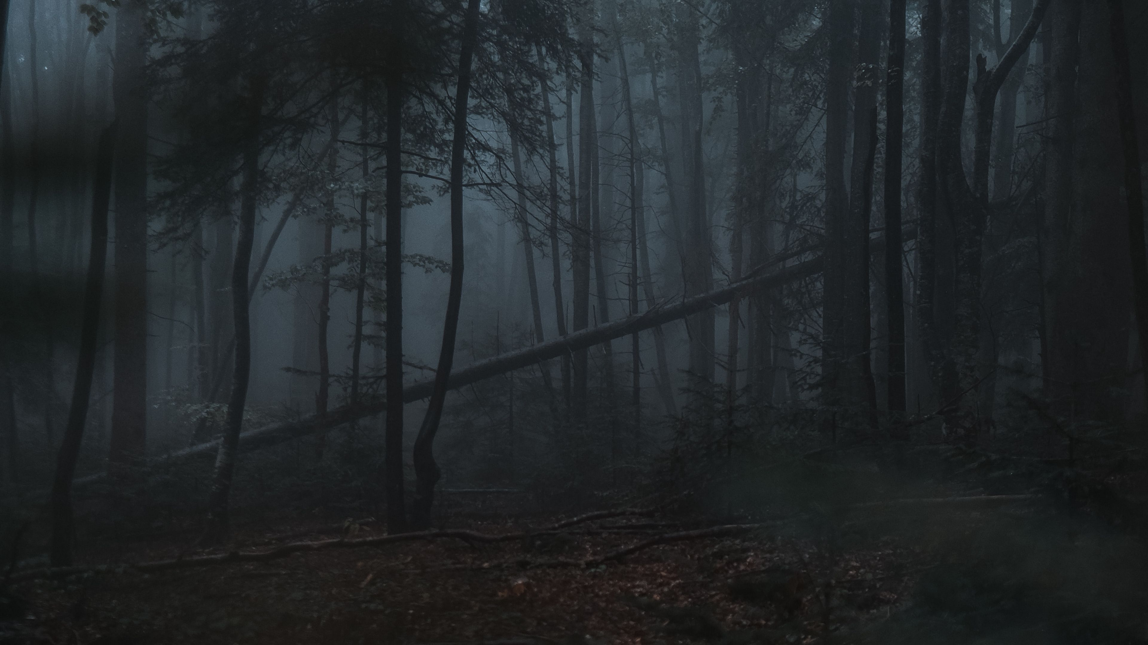 Download wallpaper 3840x2160 forest, fog, trees, gloomy ...
