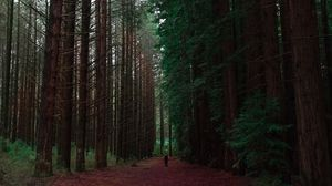 Preview wallpaper forest, man, loneliness, trees