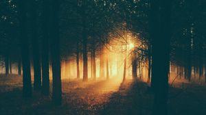Preview wallpaper forest, sunlight, fog, dark, dusk