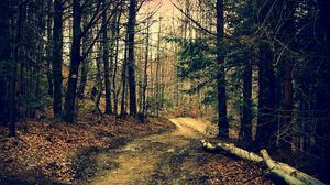 Preview wallpaper forest, trail, trees, summer