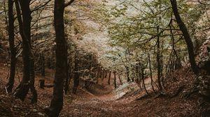 Preview wallpaper forest, trees, autumn, landscape, nature