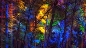 Preview wallpaper forest, trees, colorful, light