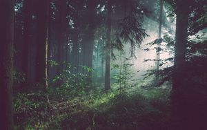 Preview wallpaper forest, trees, fog