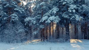 Preview wallpaper forest, winter, snow, trees, winter landscape