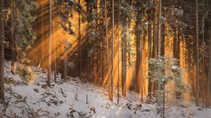 Preview wallpaper forest, winter, trees, sunlight