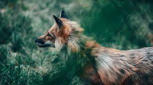 Preview wallpaper fox, glance, animal, wildlife