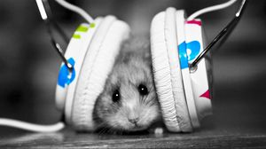 Preview wallpaper funny, music fan, music, little, hamster