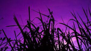 Preview wallpaper grass, dark, sky, purple, dusk