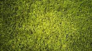 Preview wallpaper lawn, grass, greenery, texture, green